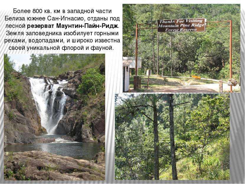 Более 800 кв. км в западной части Белиза южнее Сан-Игнасио, отданы под лесной...