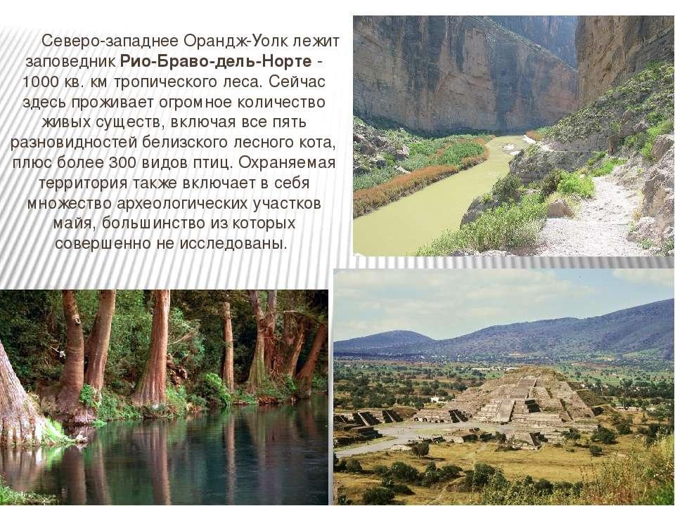 Северо-западнее Орандж-Уолк лежит заповедник Рио-Браво-дель-Норте - 1000 кв. ...