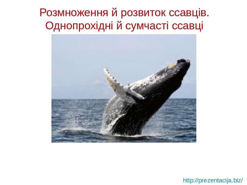 Розмноження й розвиток ссавців. Однопрохідні й сумчасті ссавці http://prezent...