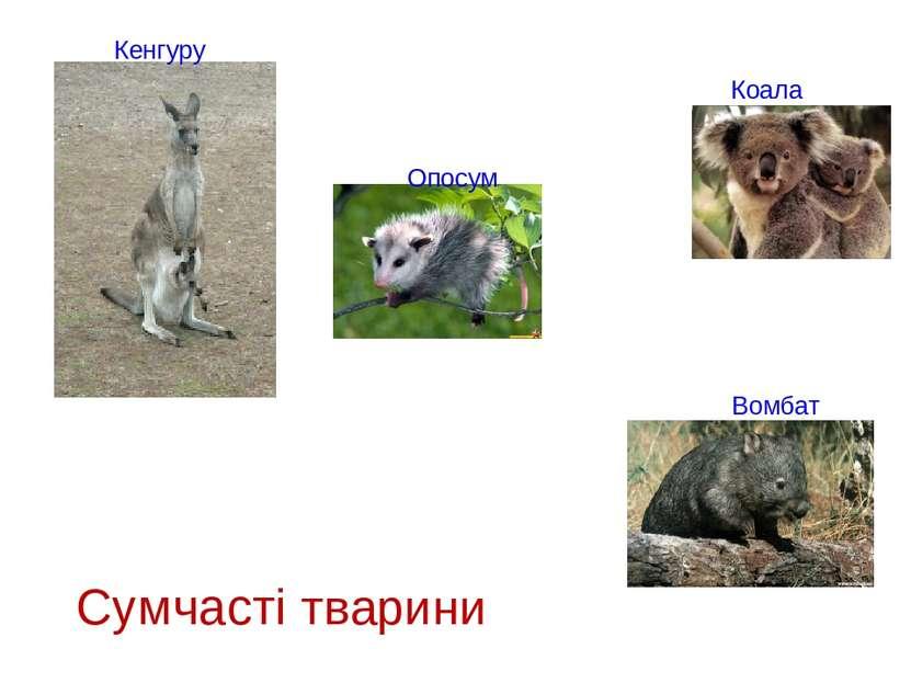 Сумчасті тварини Кенгуру Опосум Коала Вомбат