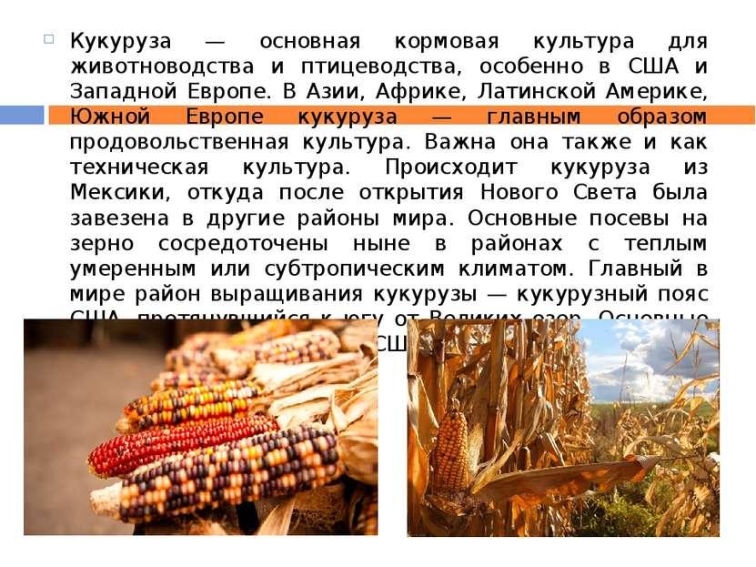 Кукуруза — основная кормовая культура для животноводства и птицеводства, особ...