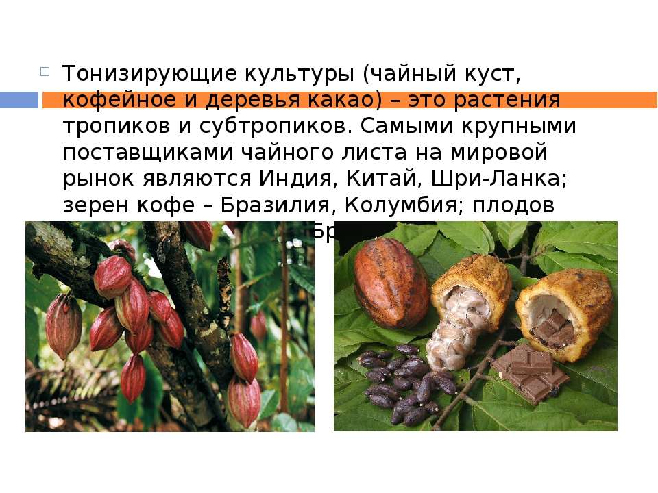 Тонизирующие культуры (чайный куст, кофейное и деревья какао) – это растения ...