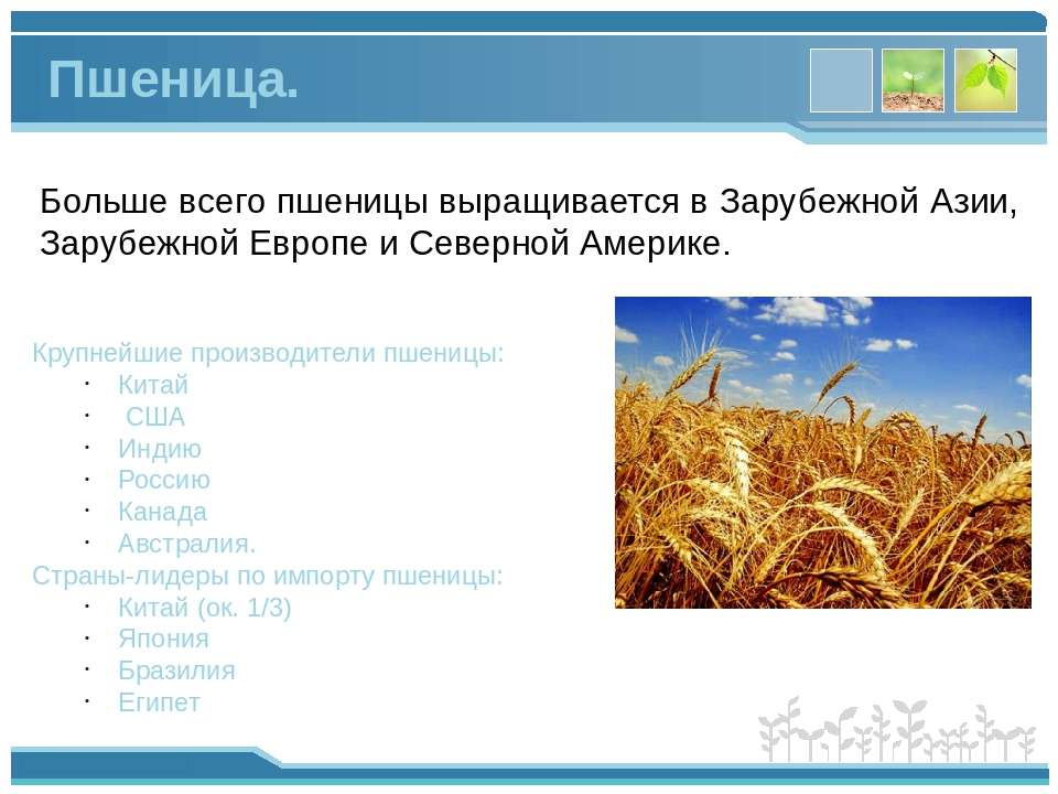 Больше всего пшеницы выращивается в Зарубежной Азии, Зарубежной Европе и Севе...