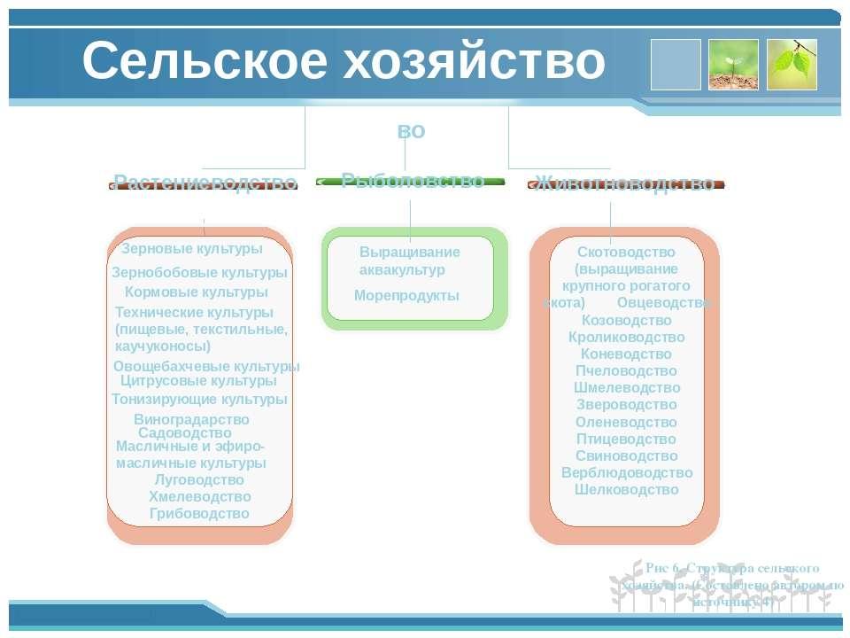 Сельское хозяйство во Растениеводство Животноводство Скотоводство (выращивани...