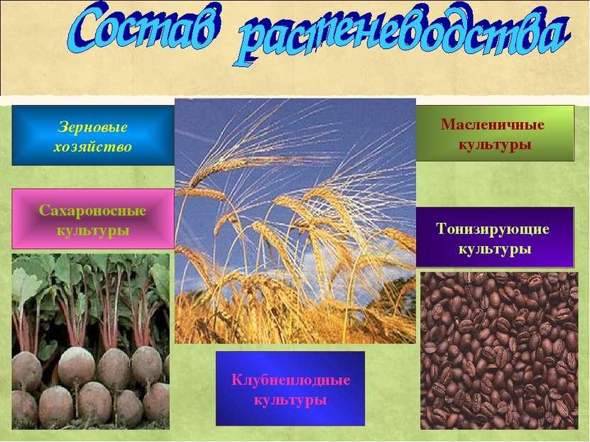 Зерновые хозяйство Масленичные культуры Сахароносные культуры Тонизирующие ку...