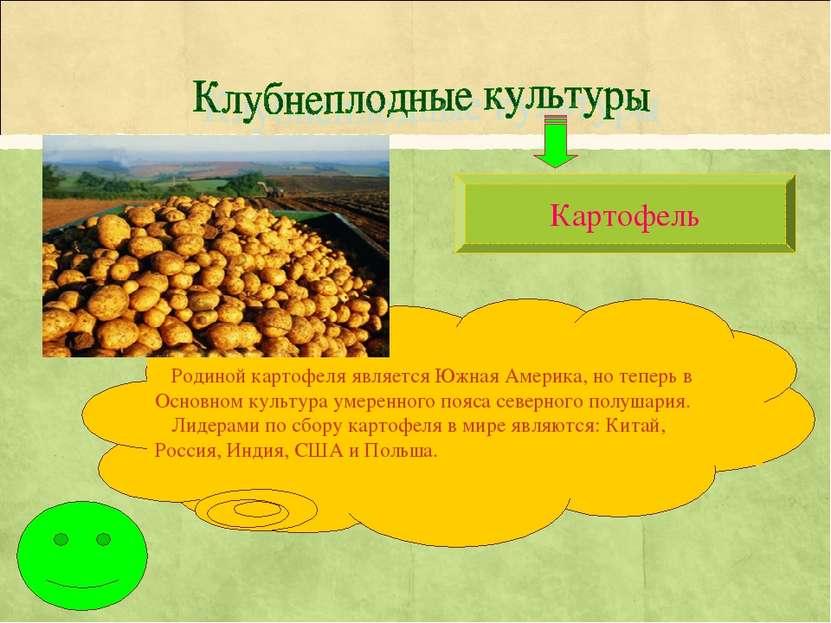 Картофель Родиной картофеля является Южная Америка, но теперь в Основном куль...