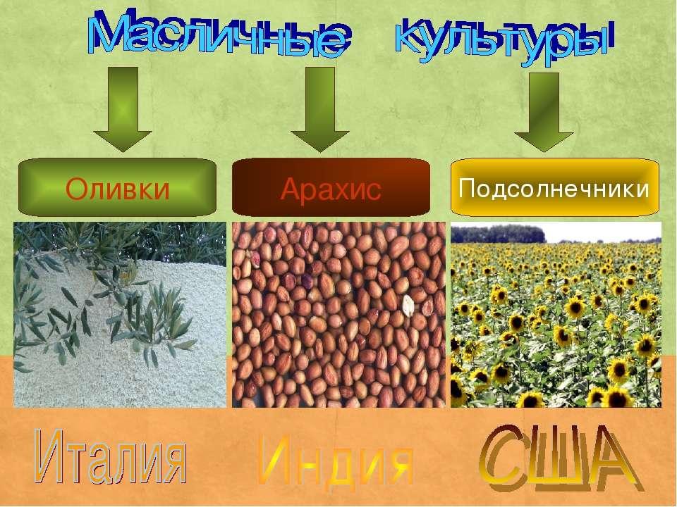 Оливки Подсолнечники Арахис