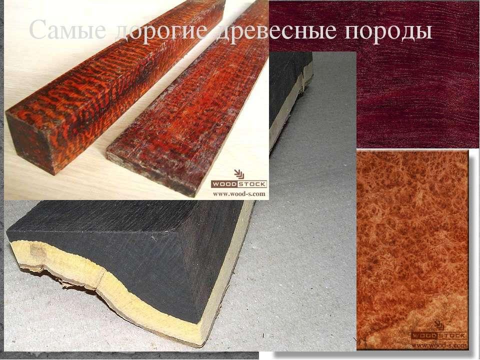 Самые дорогие древесные породы