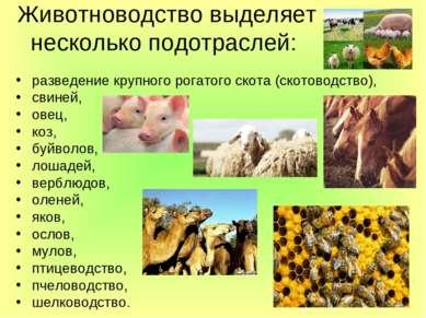 Животноводство выделяет несколько подотраслей: разведение крупного рогатого с...