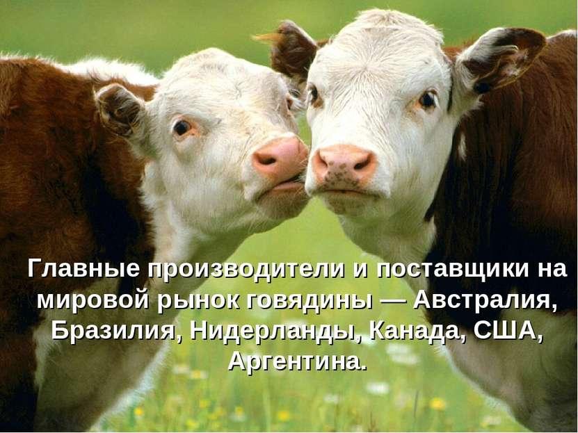 Главные производители и поставщики на мировой рынок говядины — Австралия, Бра...