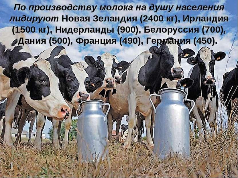 По производству молока на душу населения лидируют Новая Зеландия (2400 кг), И...