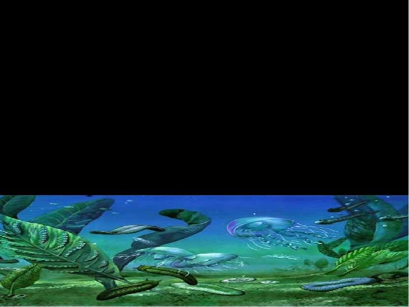 Флора и фауна. Большое значение в эволюции потомков фагоцителлы имели также и...