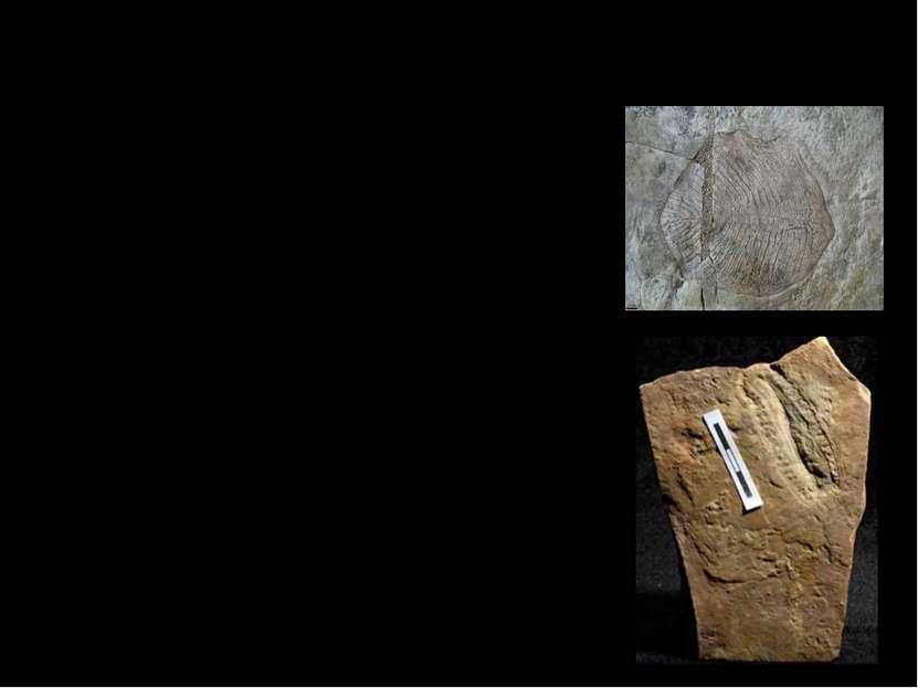 Флора и фауна. Древние окаменелости и следы, которые дошли до современных уче...