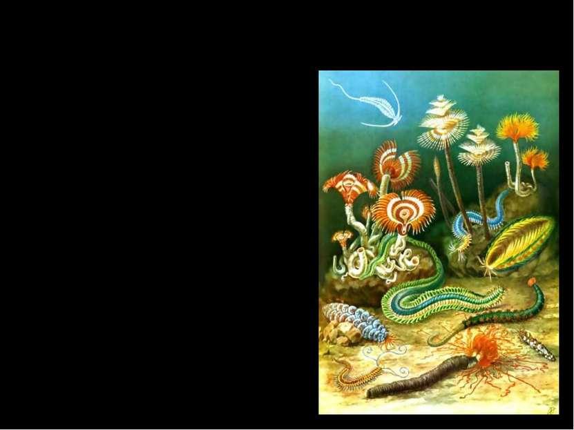 В течение этой эры достигли расцвета бактерии и водоросли. В конце протерозоя...