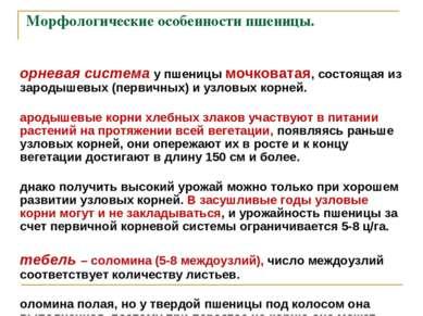 Морфологические особенности пшеницы. Корневая система у пшеницы мочковатая, с...