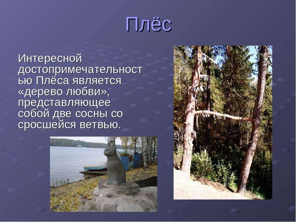 Плёс Интересной достопримечательностью Плёса является «дерево любви», предста...