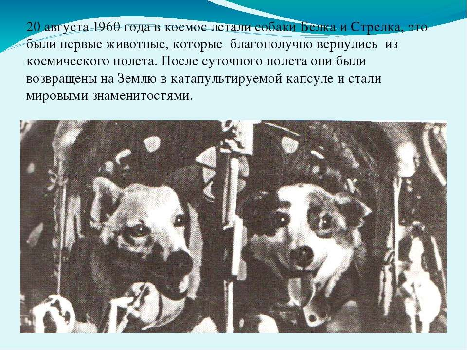 20 августа 1960 года в космос летали собаки Белка и Стрелка, это были первые ...