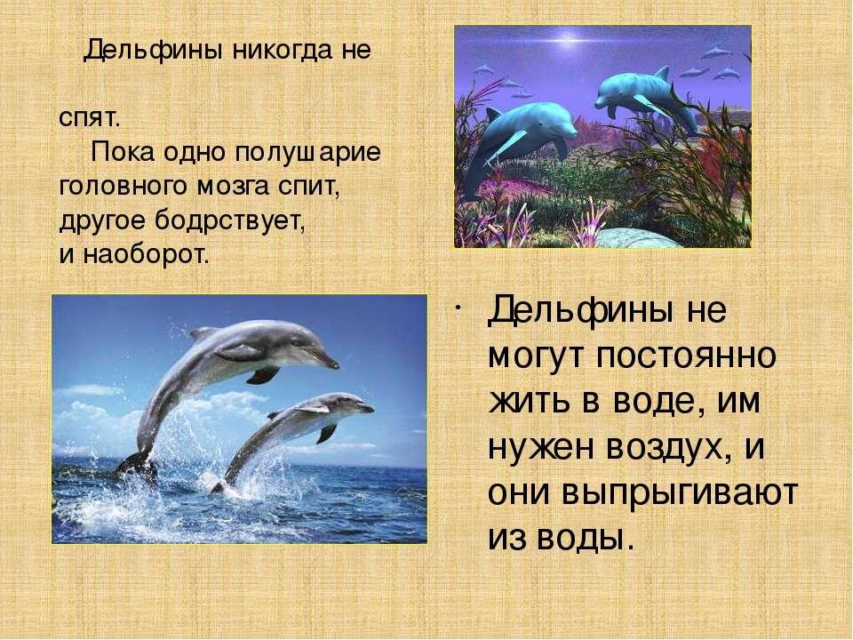 Дельфины никогда не спят. Пока одно полушарие головного мозга спит, другое бо...