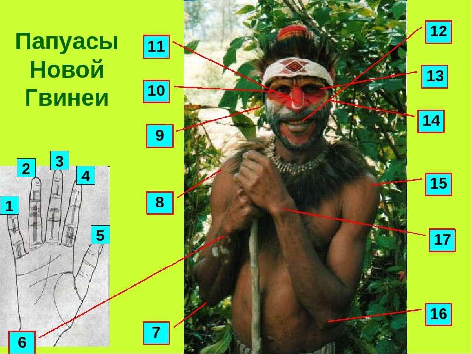 Папуасы Новой Гвинеи 1 4 3 2 5 14 13 9 7 8 10 11 12 15 16 17 6