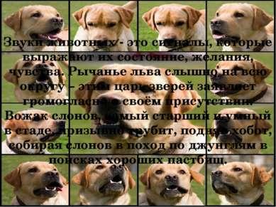 Звуки животных - это сигналы, которые выражают их состояние, желания, чувства...