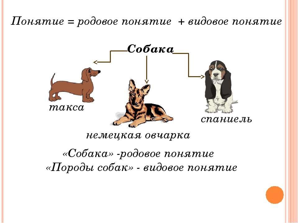 Понятие = родовое понятие + видовое понятие «Собака» -родовое понятие «Породы...