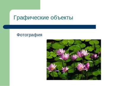 Графические объекты Фотография