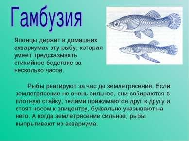 Рыбы реагируют за час до землетрясения. Если землетрясение не очень сильное, ...