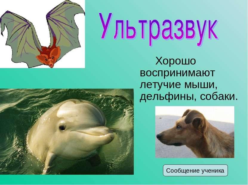 Хорошо воспринимают летучие мыши, дельфины, собаки. Сообщение ученика