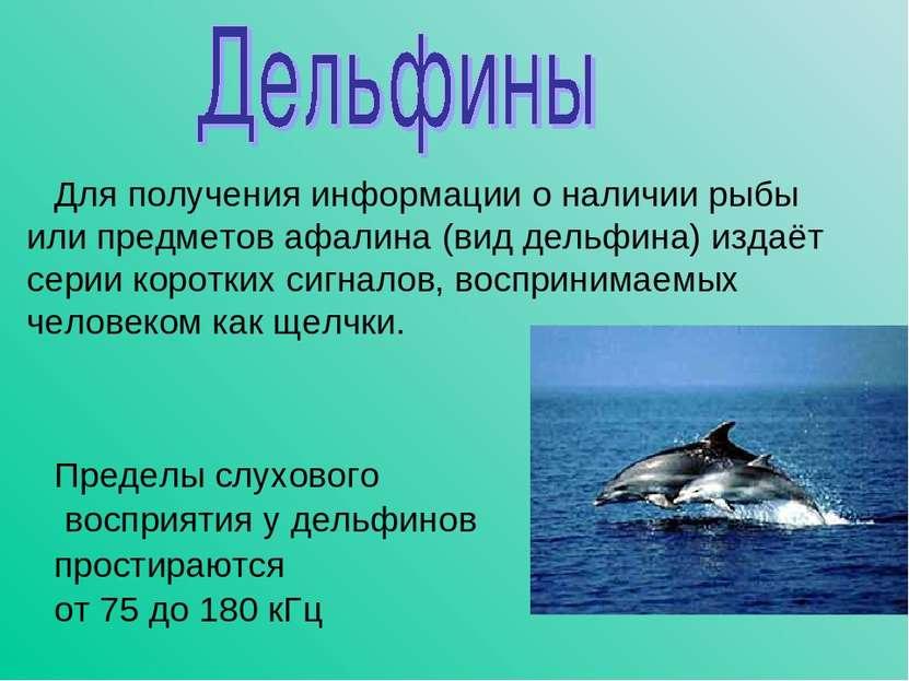 Для получения информации о наличии рыбы или предметов афалина (вид дельфина) ...