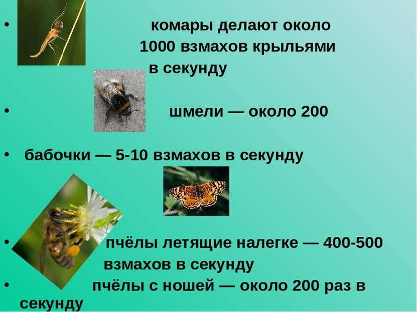 комары делают около 1000 взмахов крыльями в секунду шмели — около 200 бабочки...