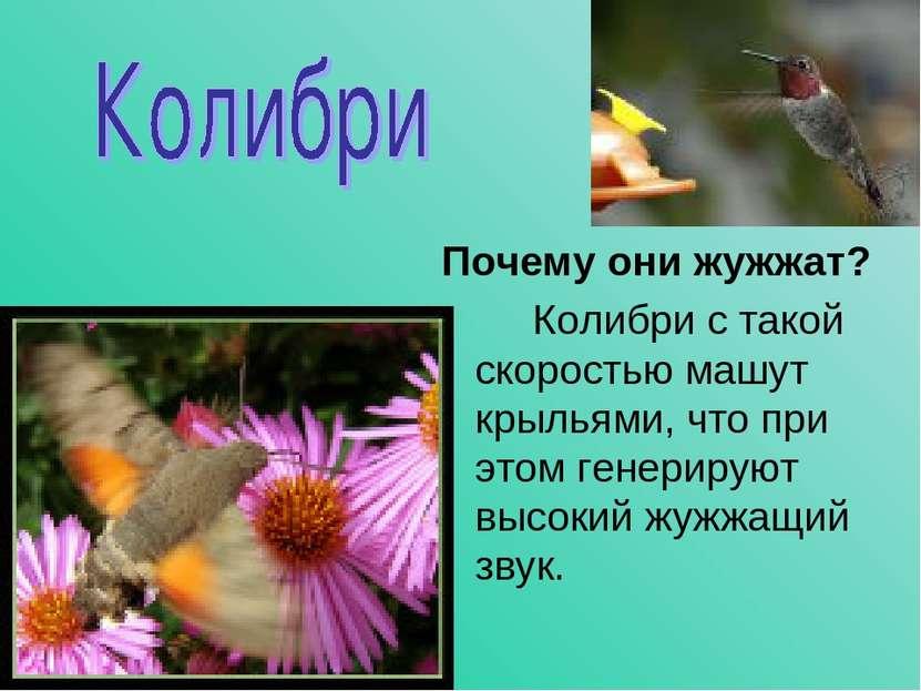 Почему они жужжат? Колибри с такой скоростью машут крыльями, что при этом ген...