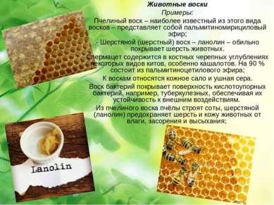 Животные воски Примеры: Пчелиный воск – наиболее известный из этого вида воск...