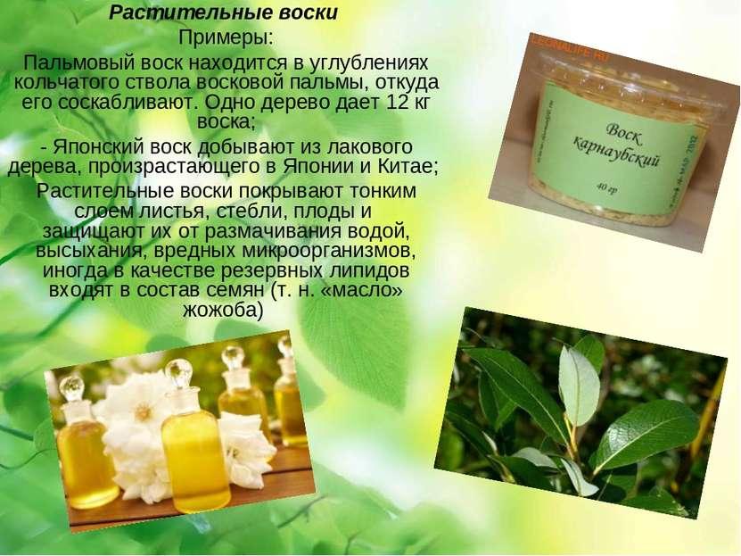 Растительные воски Примеры: Пальмовый воск находится в углублениях кольчатого...