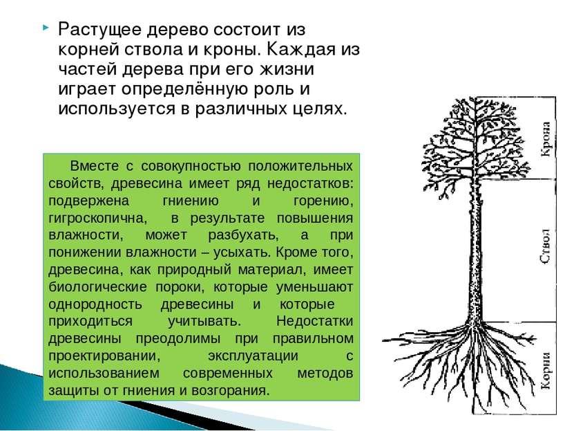 Растущее дерево состоит из корней ствола и кроны. Каждая из частей дерева при...