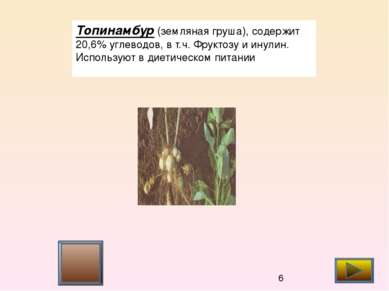 Топинамбур (земляная груша), содержит 20,6% углеводов, в т.ч. Фруктозу и инул...