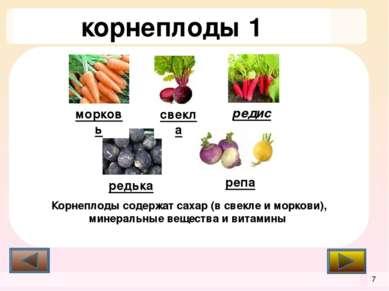 пряные и десертные овощи эстрагон эстрагон базилик артишок чабер ревень спарж...