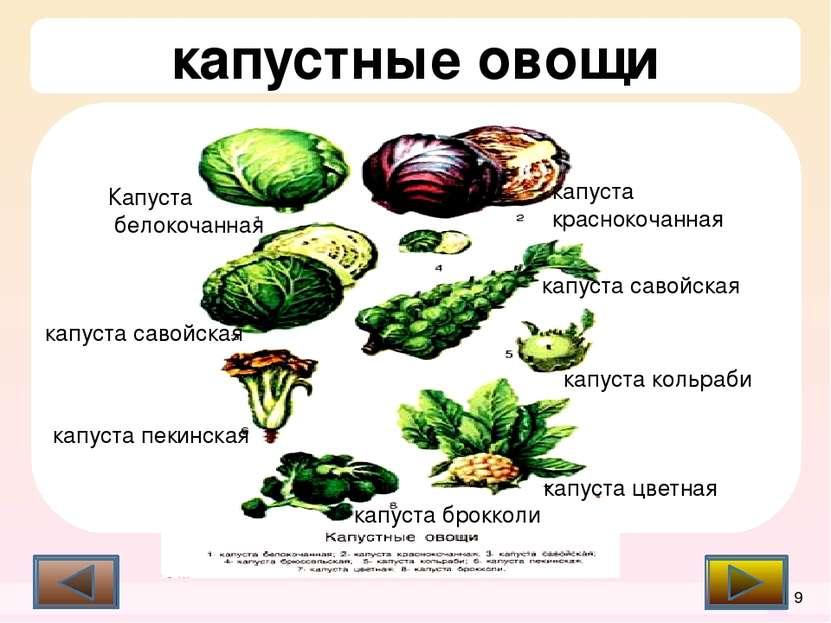 Список литературы З.П Матюхина, Э.П. Королькова, «Товароведение пищевых проду...