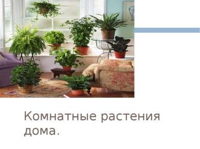 Комнатные растения дома.