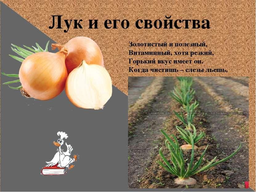 Лук и его свойства Золотистый и полезный, Витаминный, хотя резкий, Горький вк...