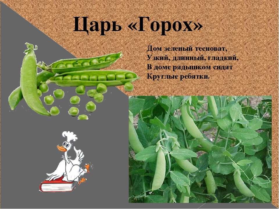 Царь «Горох» Дом зеленый тесноват, Узкий, длинный, гладкий, В доме рядышком с...