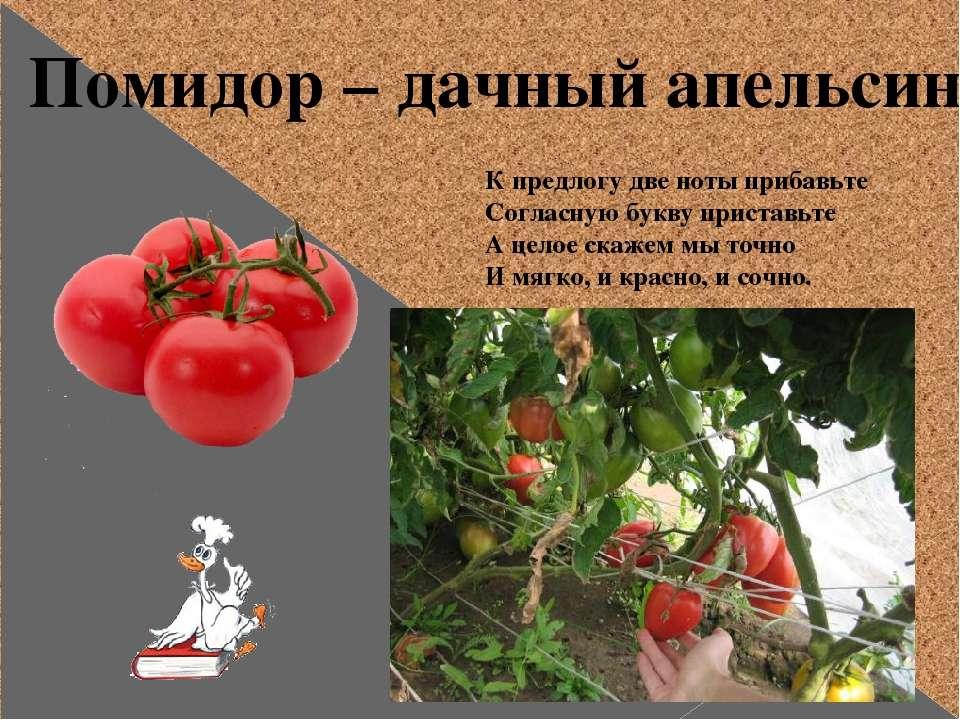 Помидор – дачный апельсин К предлогу две ноты прибавьте Согласную букву прист...