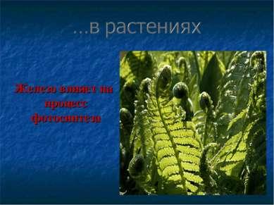 Железо влияет на процесс фотосинтеза