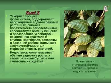 * Калий К Ускоряет процесс фотосинтеза, поддерживает необходимый водный режим...