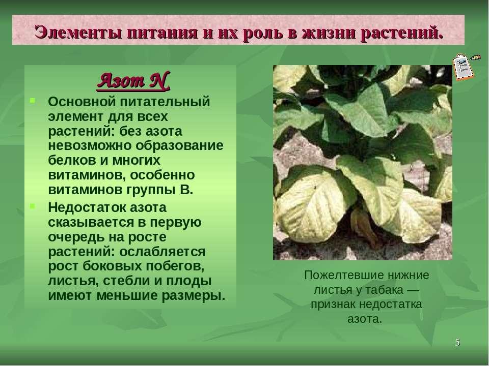 * Элементы питания и их роль в жизни растений. Азот N Основной питательный эл...
