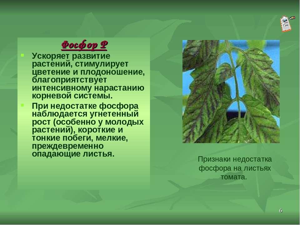 * Фосфор Р Ускоряет развитие растений, стимулирует цветение и плодоношение, б...