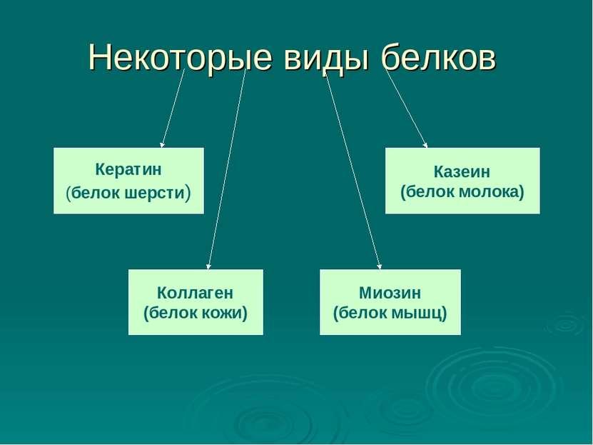 Некоторые виды белков Кератин (белок шерсти) Казеин (белок молока) Коллаген (...
