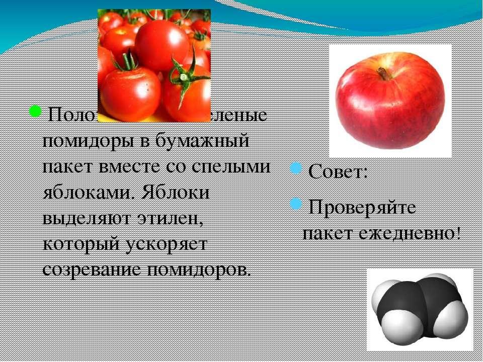 Положите ваши зеленые помидоры в бумажный пакет вместе со спелыми яблоками. Я...