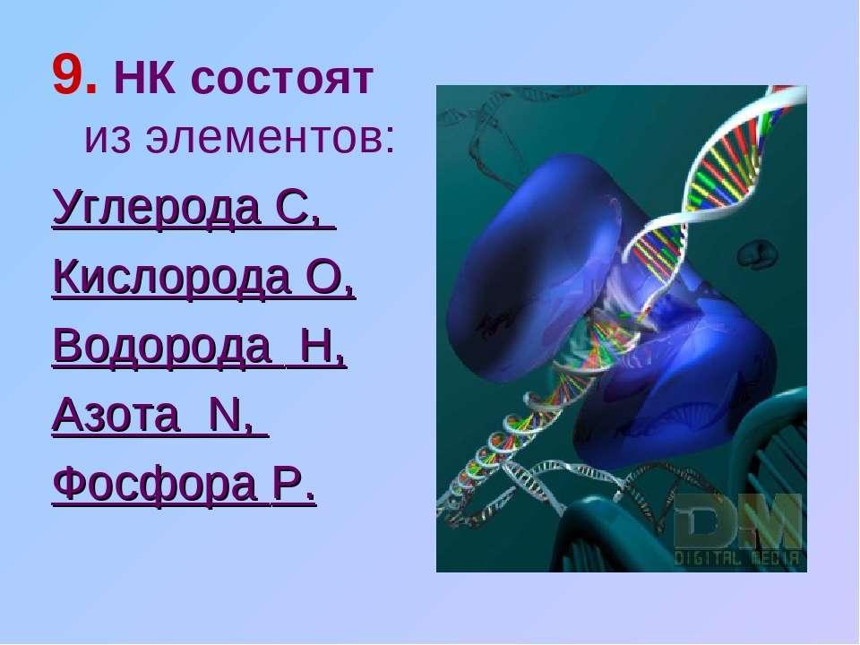 9. НК состоят из элементов: Углерода C, Кислорода O, Водорода H, Азота N, Фос...