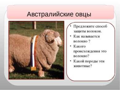 Австралийские овцы Предложите способ защиты волокон. Как называется волокно ?...
