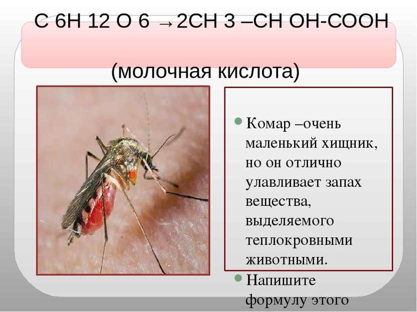 С 6Н 12 О 6 →2СН 3 –СН ОН-СООН (молочная кислота) Комар –очень маленький хищн...
